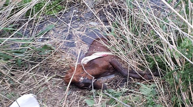Sulama kanalına düşen atı İtfaiye boğulmaktan kurtardı