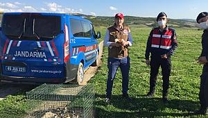 Tedavi edilen angut kuşu ve 11 yavruları doğaya salındı