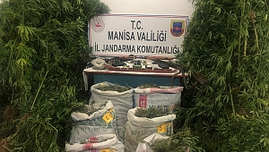 Manisa'da o ilçede15 kilogram kurutulmuş kenevir bitkisi ele geçirildi