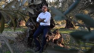 Tarım ve Orman İl Müdürü Metin Öztürk'ten zeytin açıklaması
