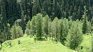 Ağustos ayında 4 bin 217 ağacın kesilmesi önlendi