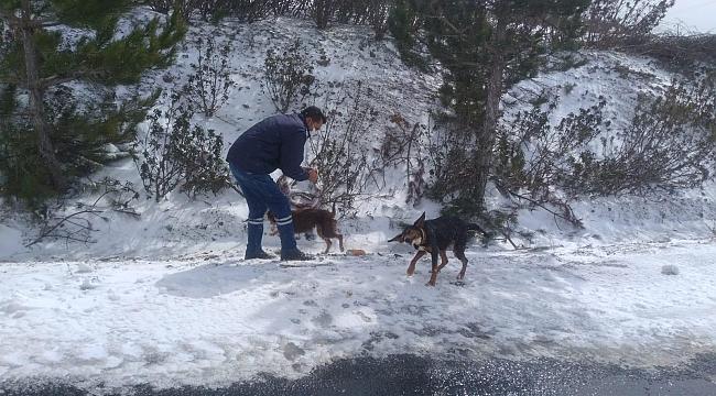 Can dostlarına karda kışta yem