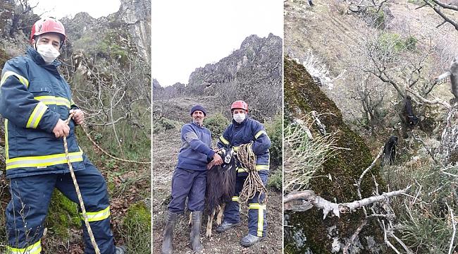 İtfaiye ekipleri dağda mahsur kalan keçiyi kurtardı