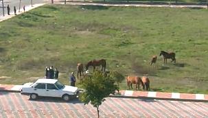 Manisalılar yıklı atlarıyla fotoğraf çekilmek için yarıştı