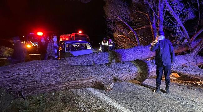 Otomobil rüzgarın devirdiği ağaca çarptı: 3 yaralı