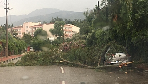 Manisa'da 200'ü aşkın ağaç, şiddetli fırtınadan zarar gördü