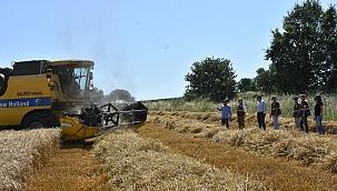 Manisa'da buğday ve arpada hasat sezonunun devam ediyor