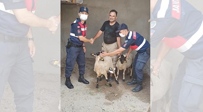 Kaybolan kuzular Jandarmanın çabalarıyla bulundu