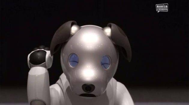 Japonya'nın Sony Robotik Köpek Tanıtımı