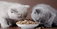 En Güncel Yavru Kedi Maması Kampanya Fırsatları