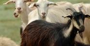 Manisa'daki veba salgınıyla ilgili önemli açıklama