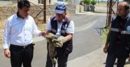 Yaralı yavru tilkiye şefkat eli