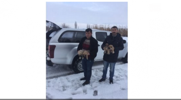 Yavru köpeklere donmaktan kurtardılar